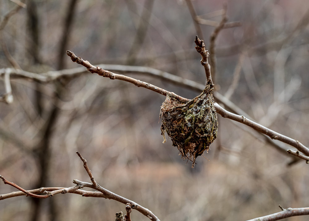 animal photography bird nest photo