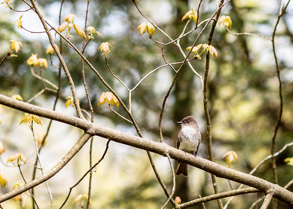 animal photography bird in a branch