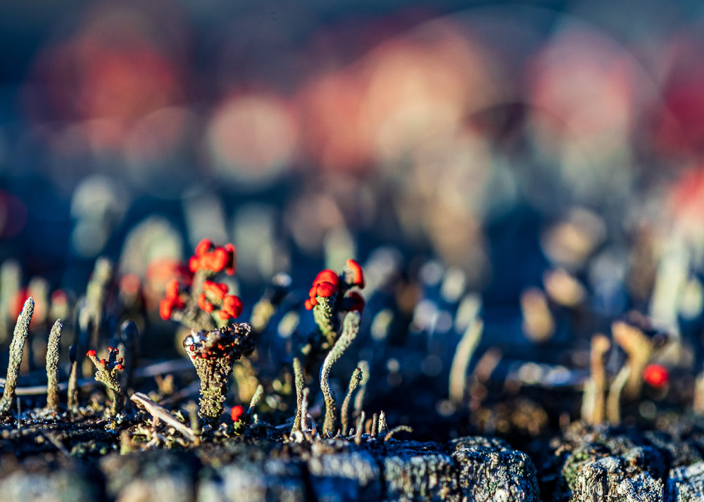 macro photography tiny plants fungi moss landscape photography nature