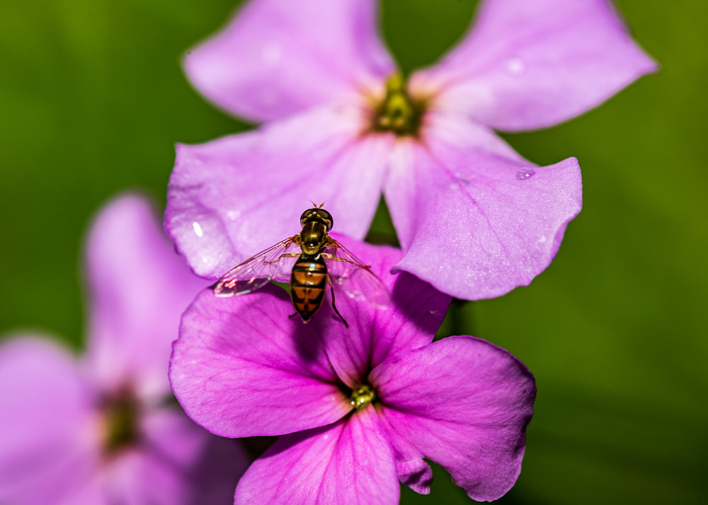 animal photography insect on a flower insect macro photography