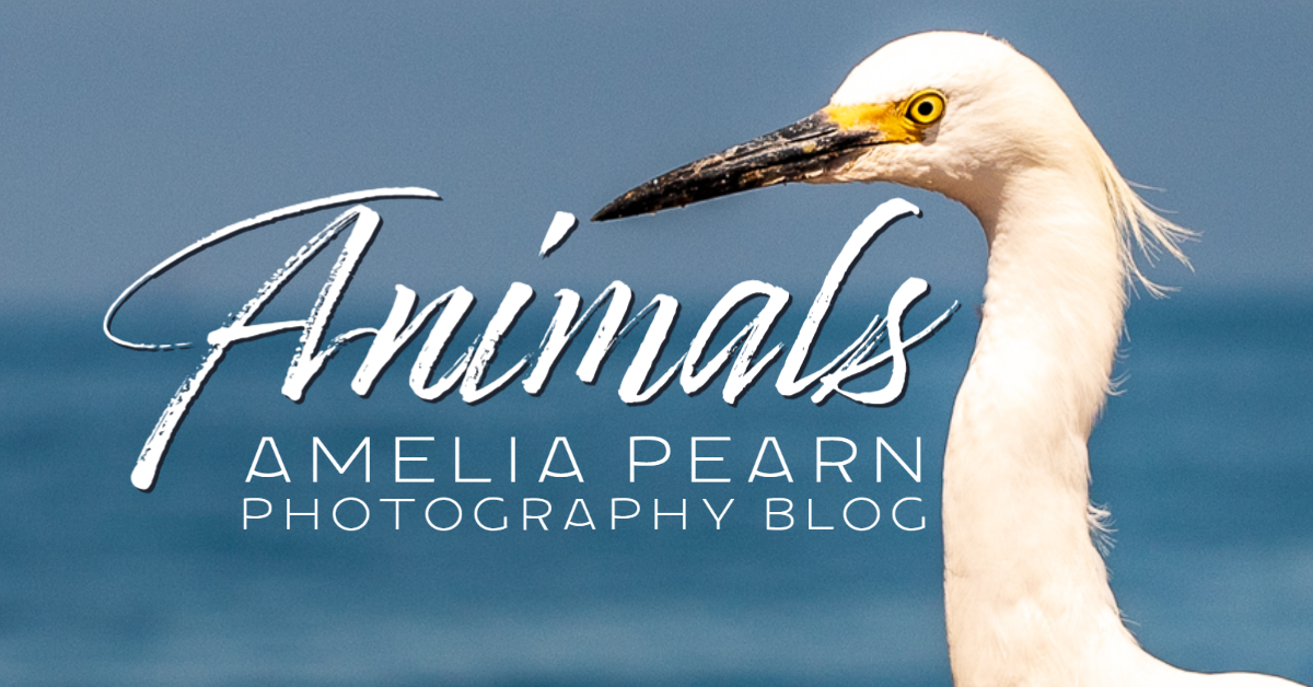 animal photography blog birds and insects