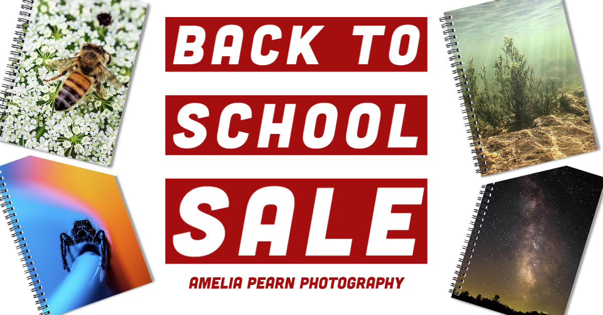 back to school sale fall 2020