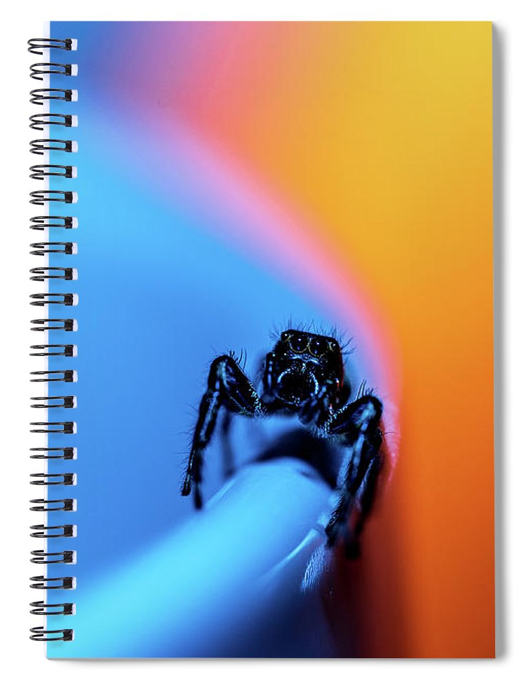 Holiday sales 2020, gift ideas, notebooks, macro photography