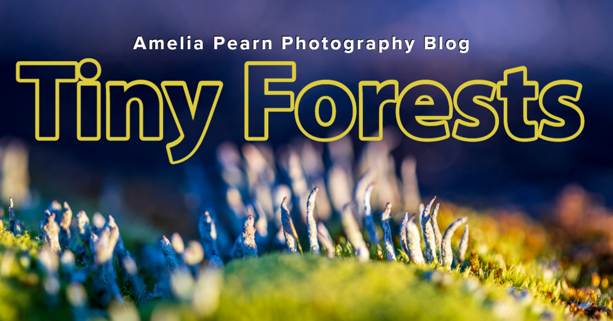 macro photography tiny plant landscape photography