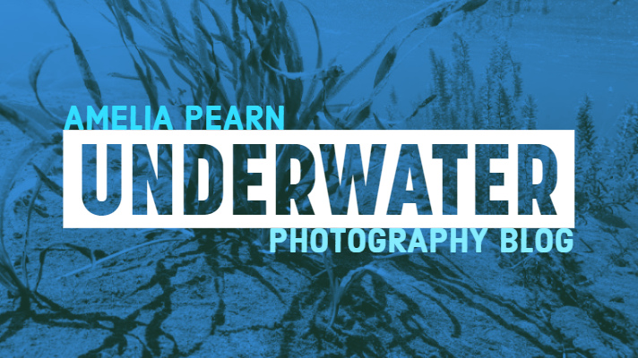 Underwater photography Blog Pike County PA Photographer