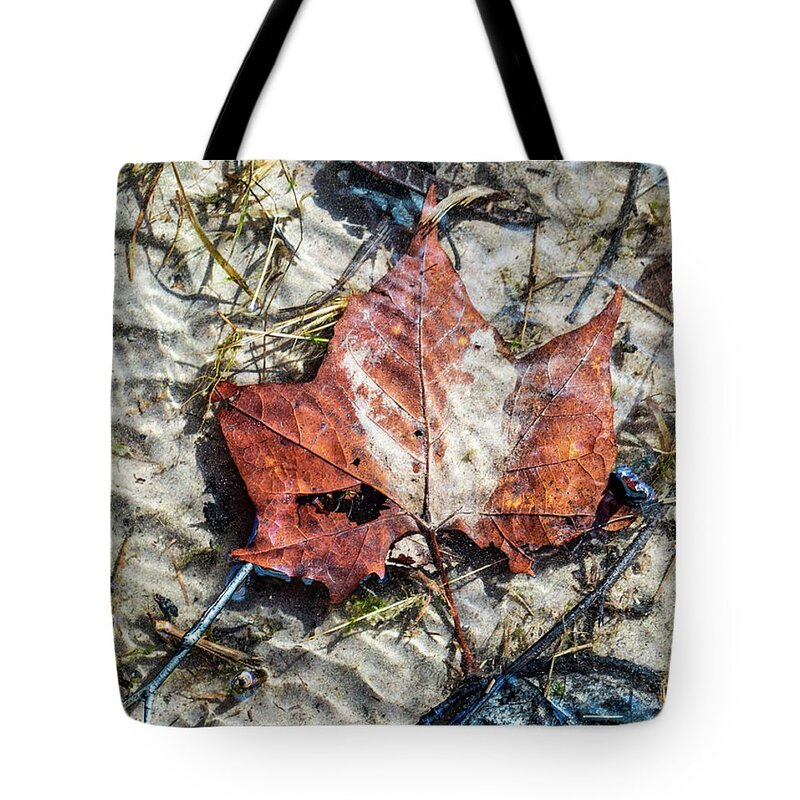 Holiday sales 2020, gift ideas, reusable shopping tote bags, underwater photography